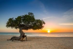 Aruba Tree Beach View