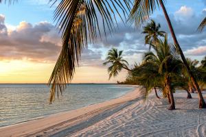Bahamas Beach Tree View