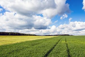 Belarus Land View