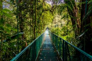 Costa Rica Bridge Through Forest
