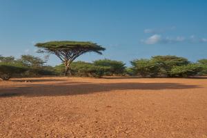 Djibouti Woodland View
