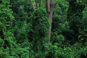 Equatorial Guinea Forrest View