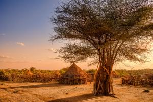 Ethiopia Trees and Hut