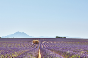 France Field View