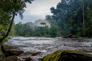 French Guiana Water:Forest View