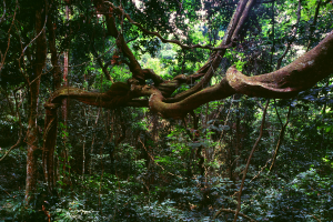 Gabon Rainforest