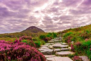 Ireland Floral Landscape View