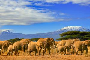 Kenya Elephant with Mountain Background