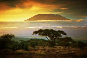 Kenya Tree with Mountain View