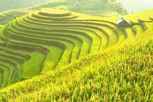 Laos Field View