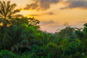 Liberia Forrest View