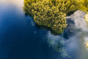 Lithuania Water Forrest View