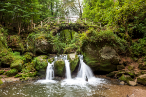 Luxembourg Tree Waterfall Photo
