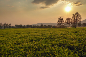 Malawi Grass View