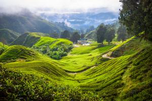 Malaysia Hills View