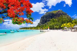 Mauritius Flower Tree with Beach