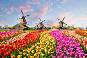 Netherlands Field View