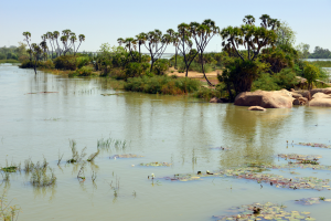 Niger Water:Trees View