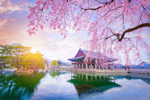 South Korea Cherry Blossom Building on Water