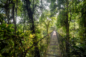 Suriname Forest Bridge View