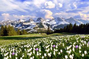 Switzerland Mountain Field View