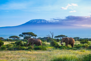 Tanzania Elephants with Mountain View
