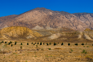 Turkmenistan Trees Landscape Mountain View