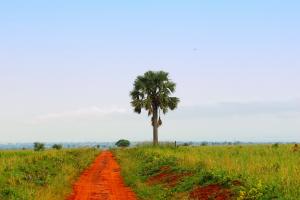 Uganda Red Dirt View