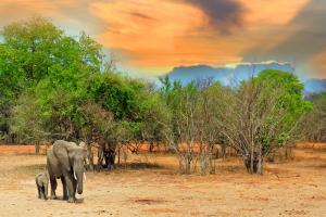 Zambia Elephants on Landscape