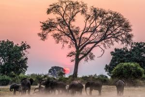 Zimbabwe Elephants Over Sunset on Safari